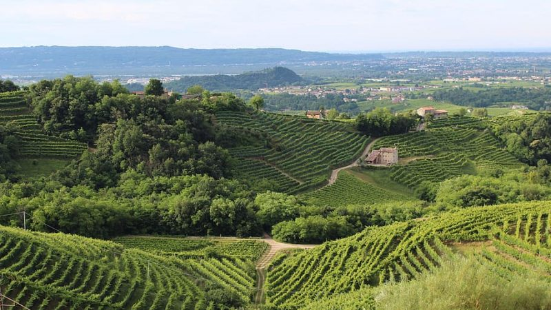 food e wine made in veneto